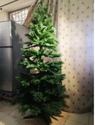 Christmas Tree B&Q