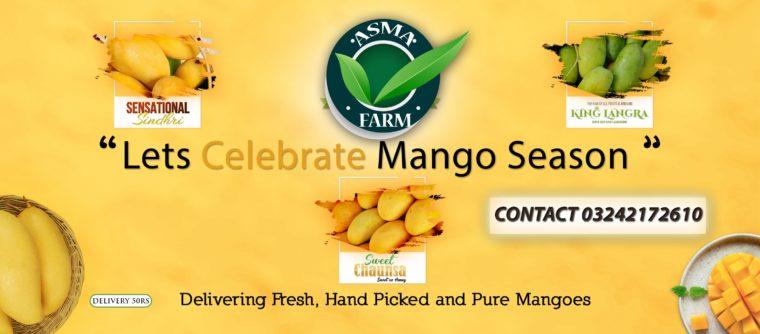 Sindhri Mango Sale 1100 Per Peti