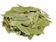 Sanna Makki Leaves